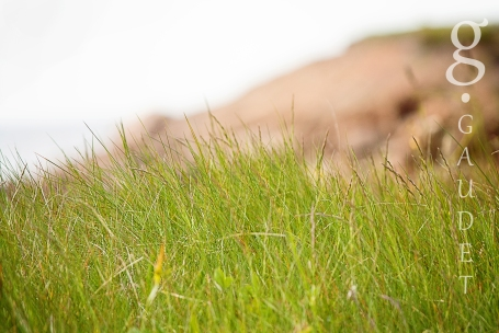 grassandcliffsWM